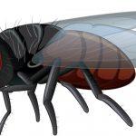 Bahaya Lalat!