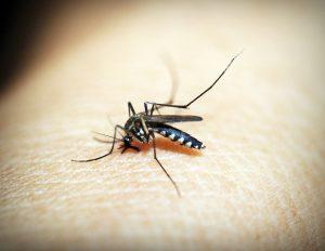 Nyamuk: Bukan Sekadar Pembawa Penyakit