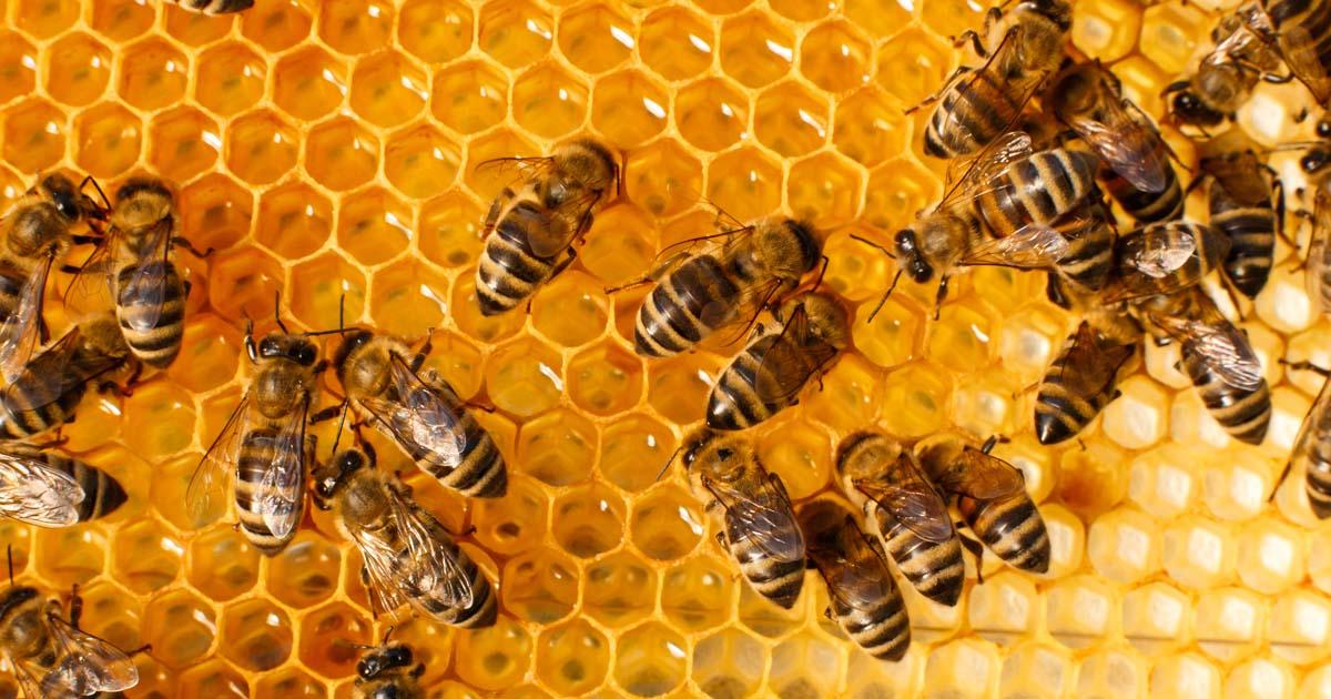 Read more about the article Lebah dan Madu: Keajaiban Ciptaan Allah