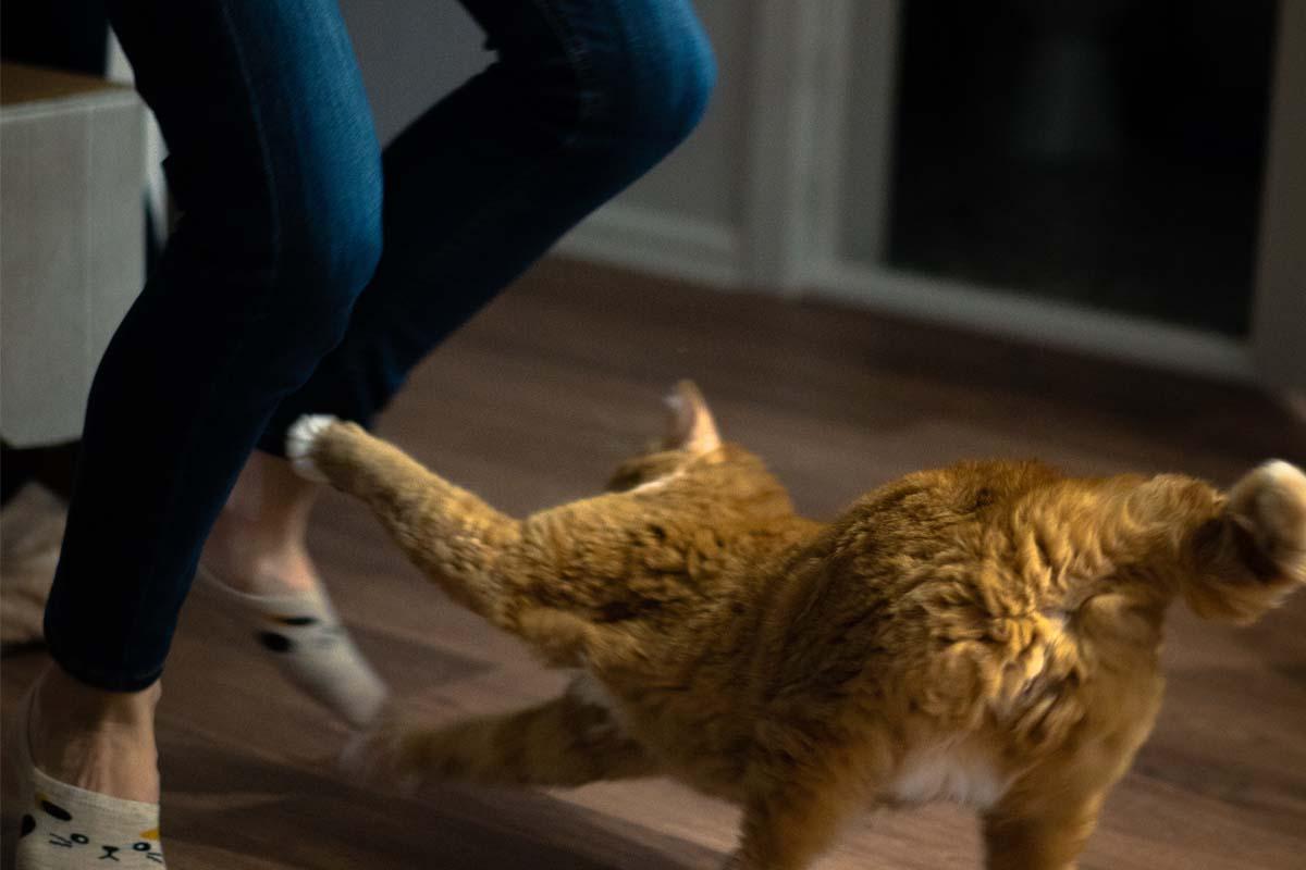 Adik! Jangan Sepak Kucing Tu!