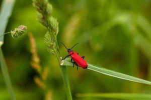 Para Guru Dan Ibu Bapa, Ayuh Meneroka Pendidikan Bertemakan Serangga!